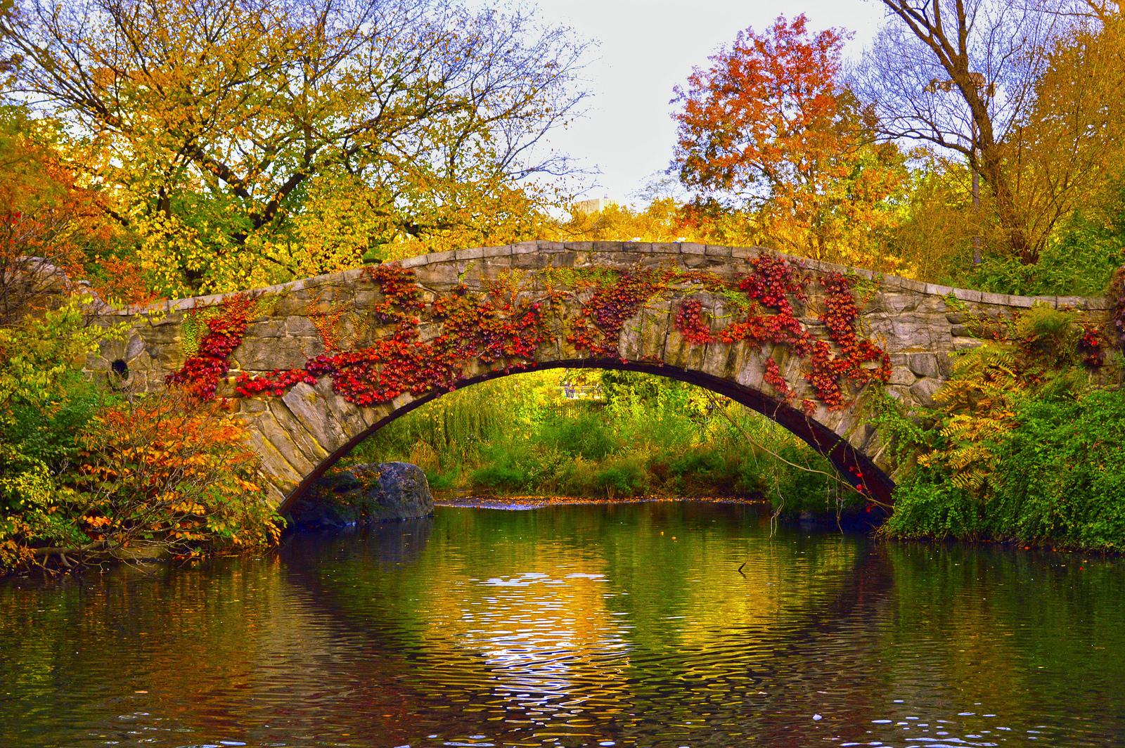 Central Park New York Bridge With Flowers Frederico Domondon